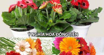 Shop hoa tươi Mrhoa mách bạn ý nghĩa hoa Đồng Tiền