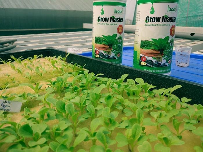 Gieo hạt để trồng rau thủy canh